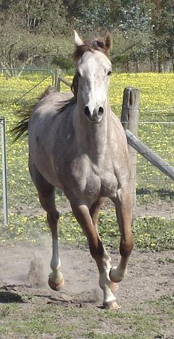 Stud Breeding Small Donkey | just b.CAUSE